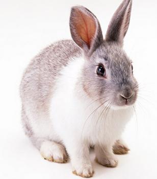 台風 ウサギ 画像.png