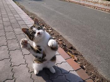 iyashi-cat_02200.jpg