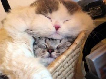 iyashi-cat_02208.jpg